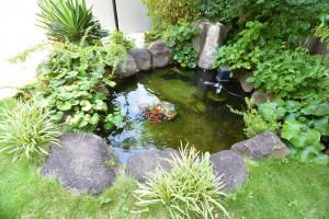敷地内の池②
